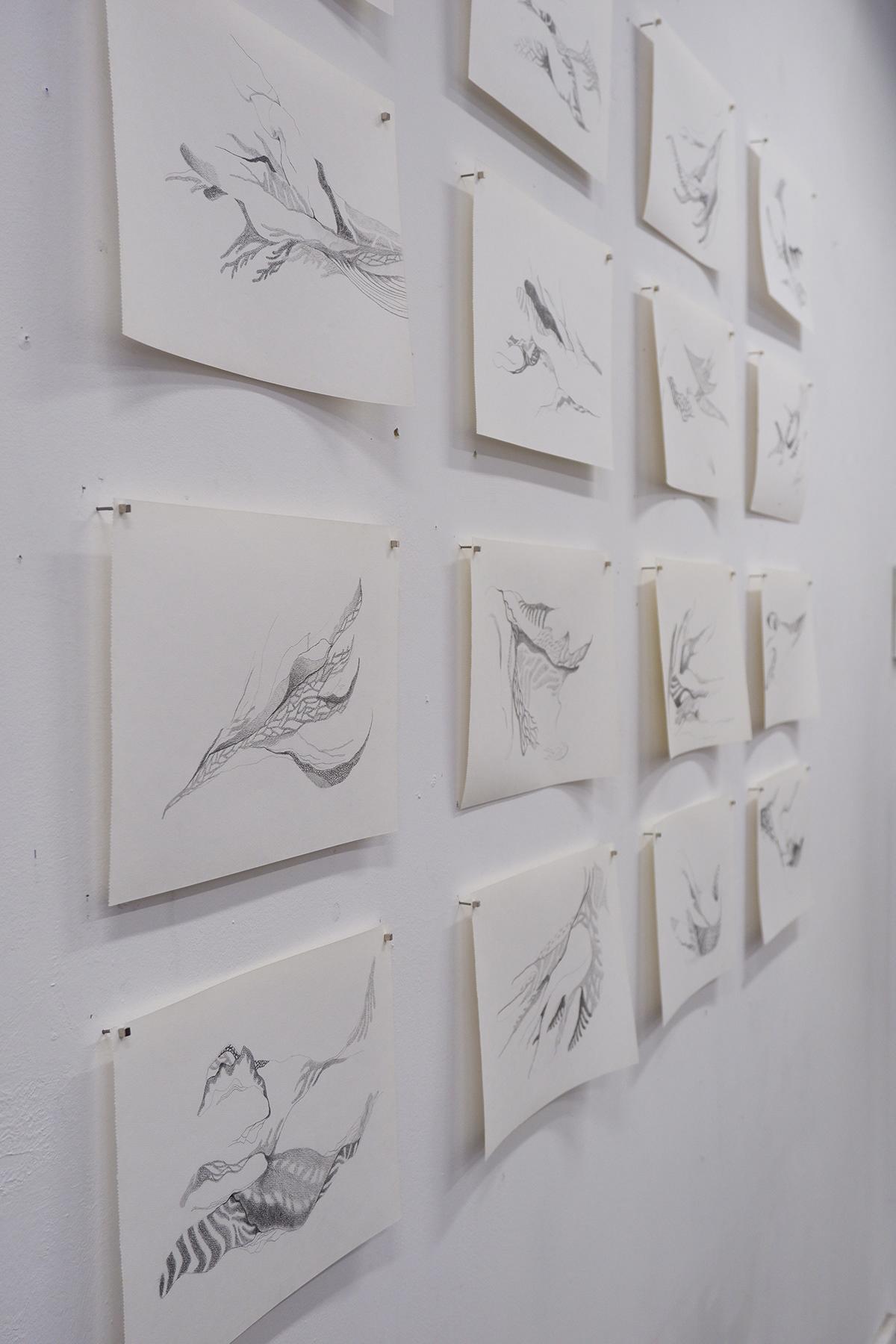 Drawing  pencil plants Nature paper soft black White Exhibition  light