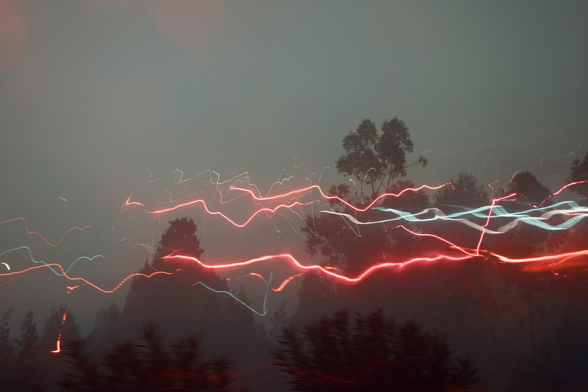fog Landscape lightning forest dark long exposure color neon Tree  rain