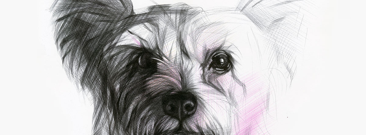 sketches animals dogs ballpoint pen cats classic art