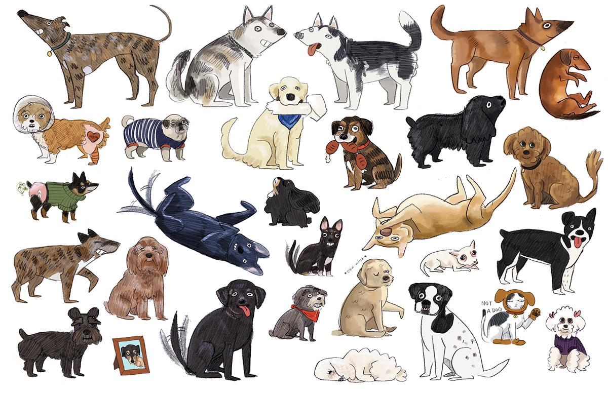 dogs animals caricatures