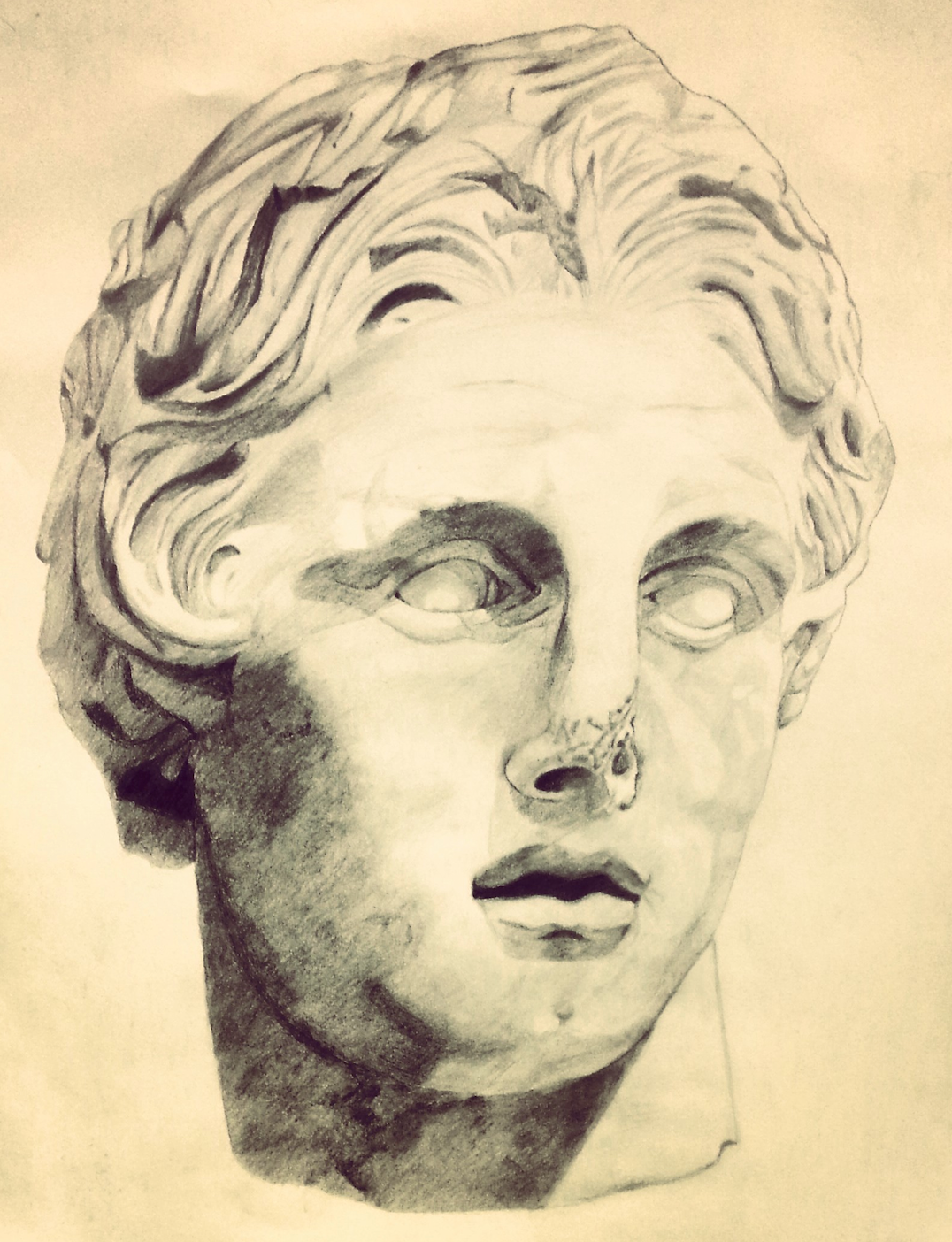 bust of alexander the great drawing on behance