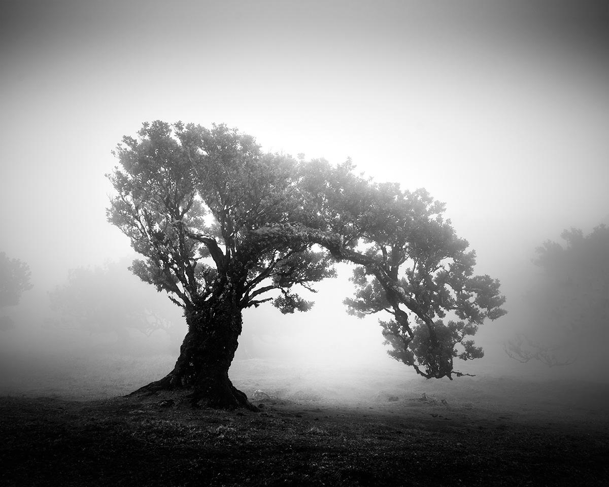 fanal Madeira fog mist trees Minimalism minimal Tree  forest Landscape