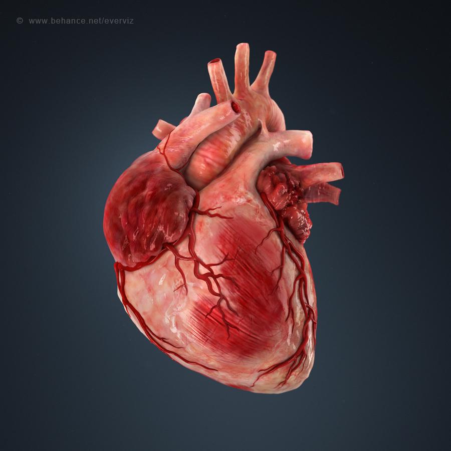 Открытка сердце человеческое