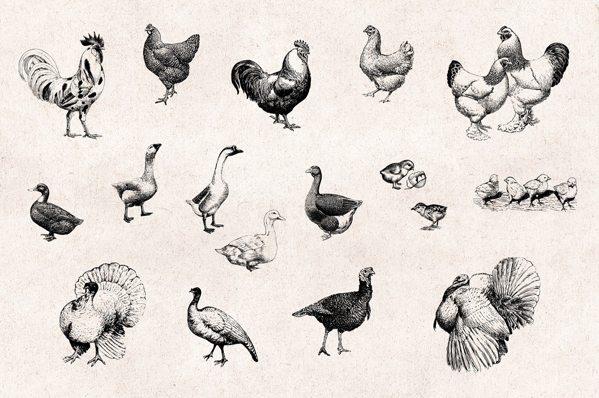 Farm Animals , Vintage Engraving Illustrations Set on Behance