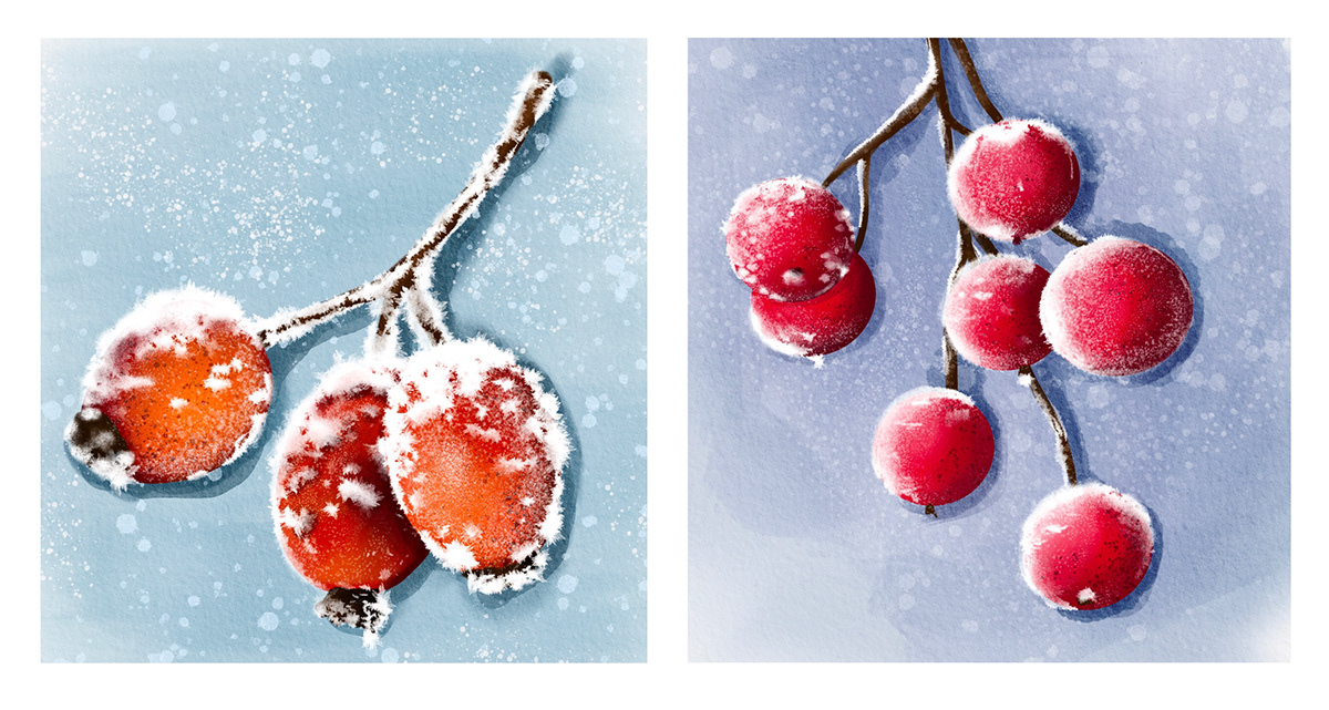 dogrose Flowers ILLUSTRATION  Nature rosehip snow watercolor winter