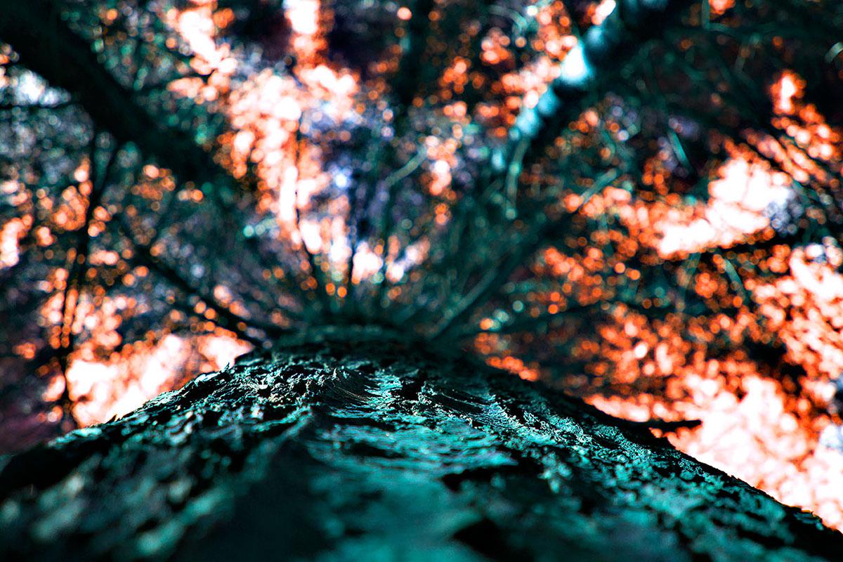 bridges. woods. color