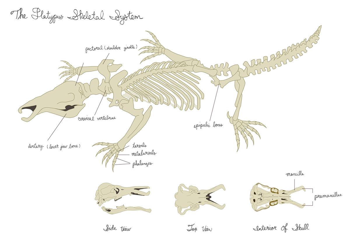 Science/Zoological Illustration on Behance