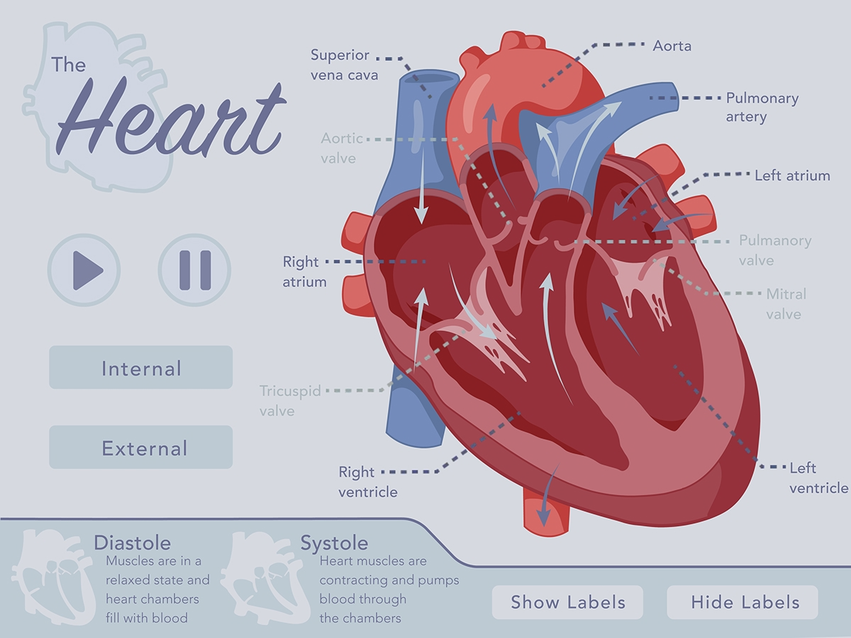 The Human Heart Interactive Layout On Behance