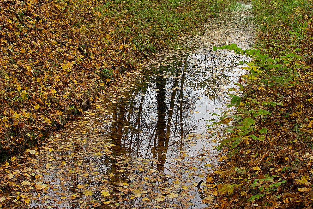 Odbicie widoku drzew w strumieniu zasypanym jesiennymi liśćmi.
