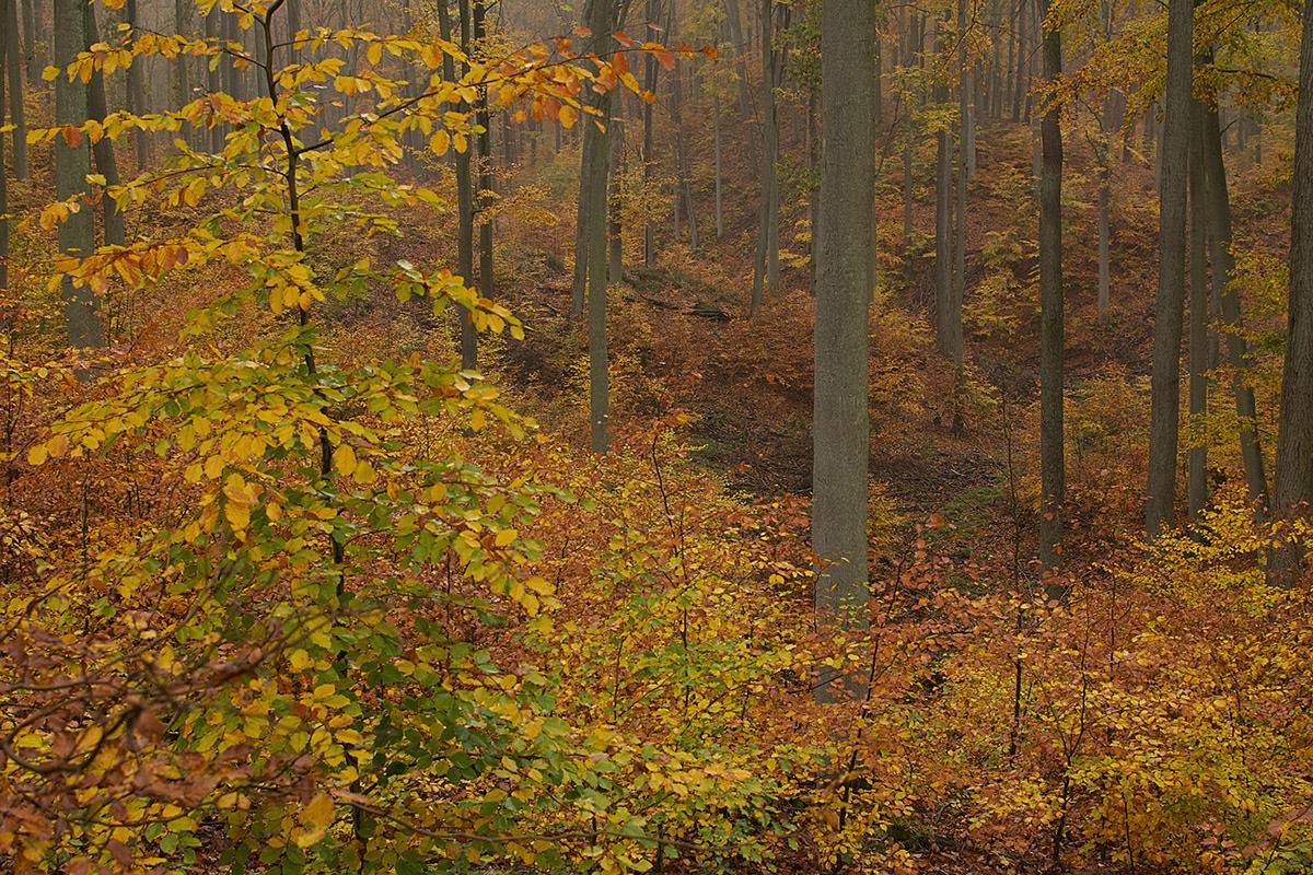 Kolorowe jesienne liście na drzewach w lesie.