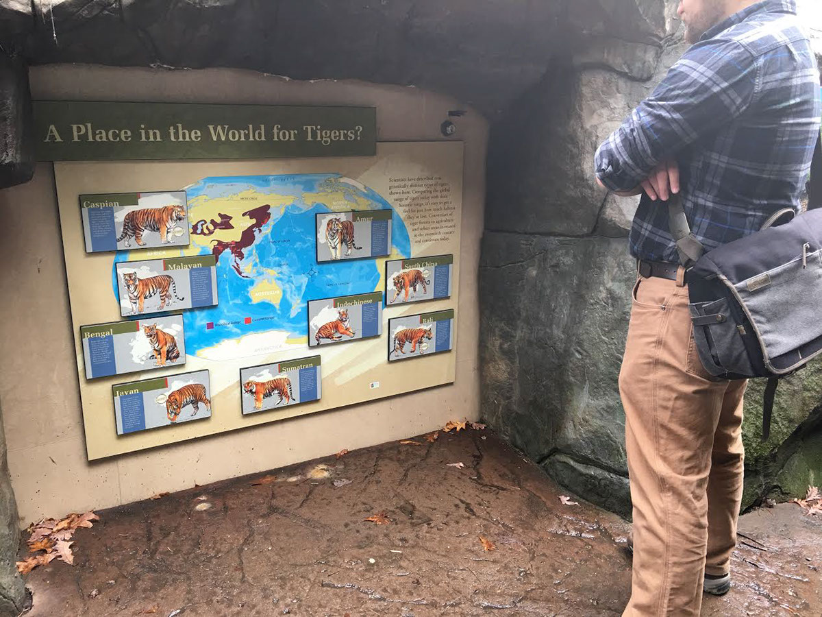 The Minnesota Zoo Tiger Base Camp On Risd Portfolios