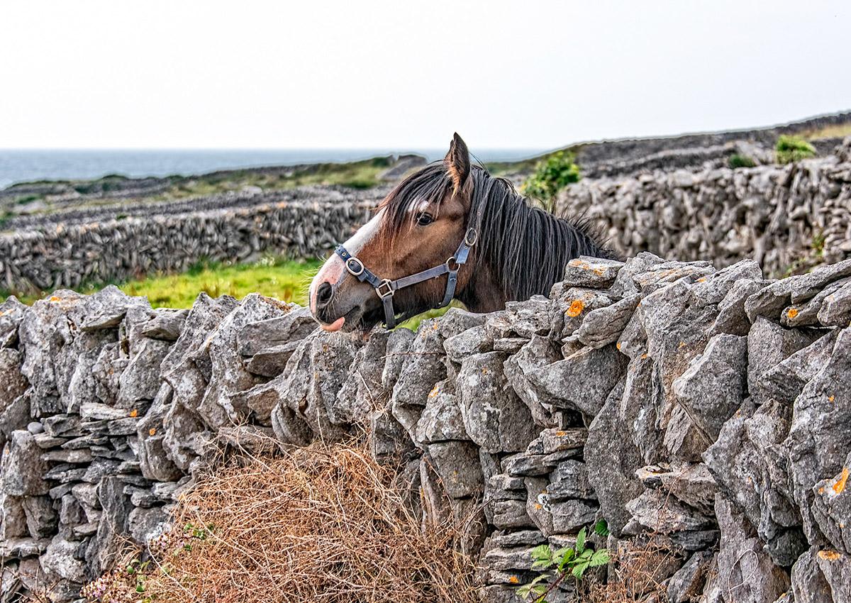 Adobe Portfolio Ireland landscapes Travel