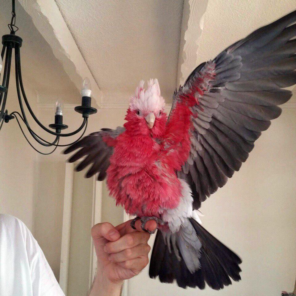 adobe illustrator Adobe Photoshop bird graphics ILLUSTRATION  Minimalism Nature parrots UI vector