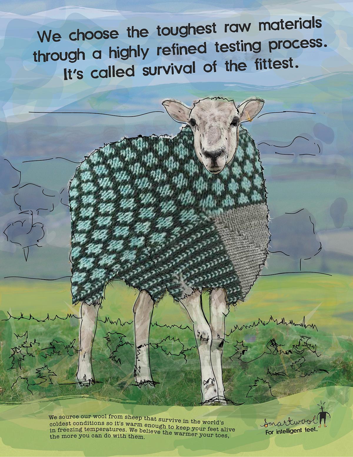 Adobe Portfolio,smartwool, sheep,wool, socks,ads