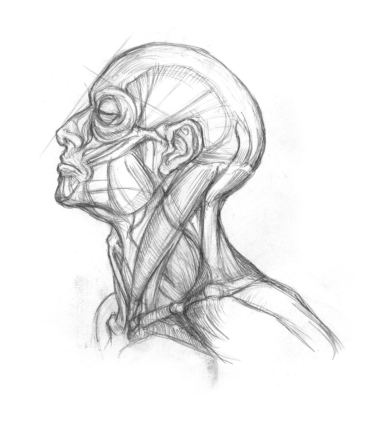 Sketchbook Figure On Behance