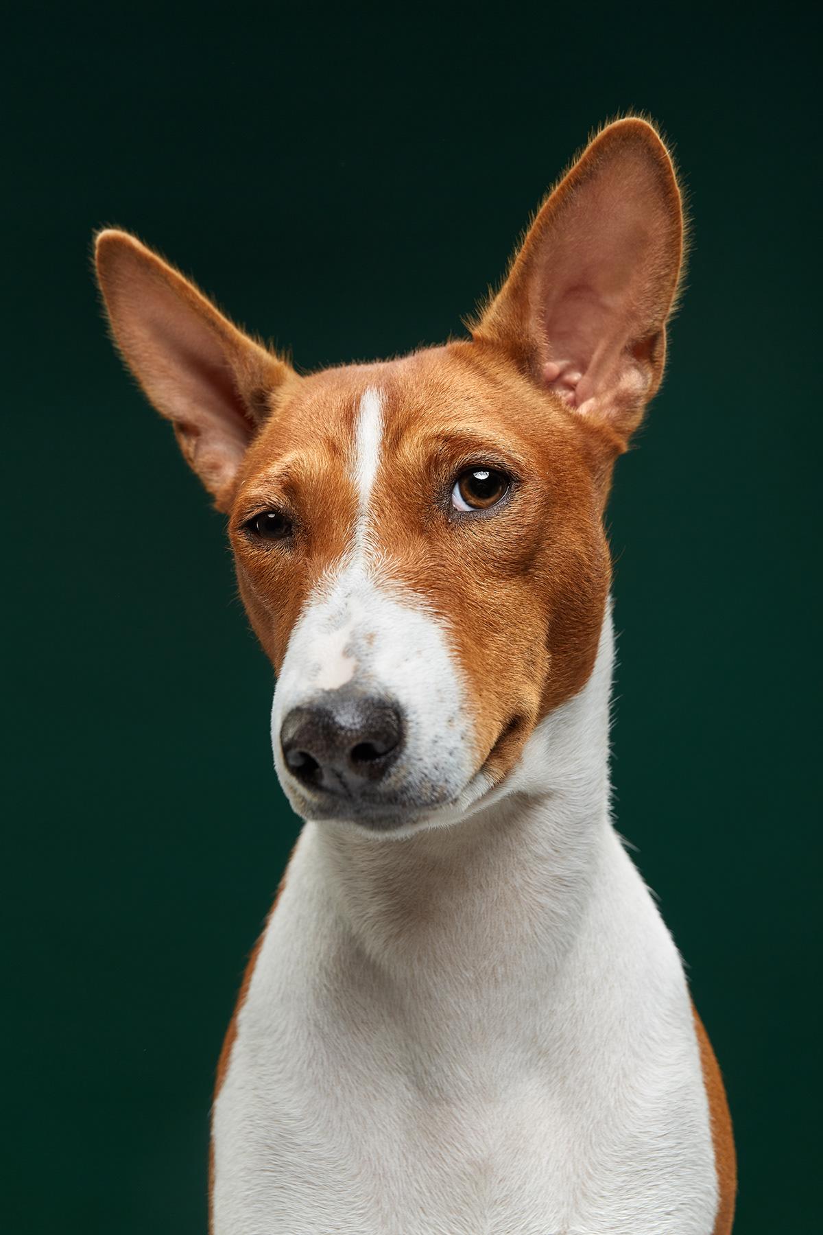 dogs dog photography dog breeds dog portrait the dog show