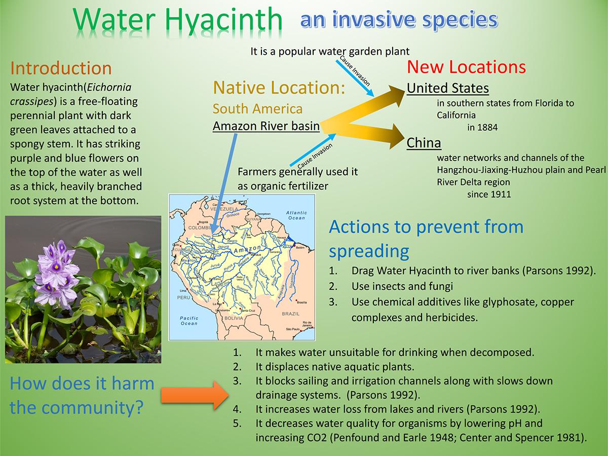 Water Hyacinth-an invasive species on Behance