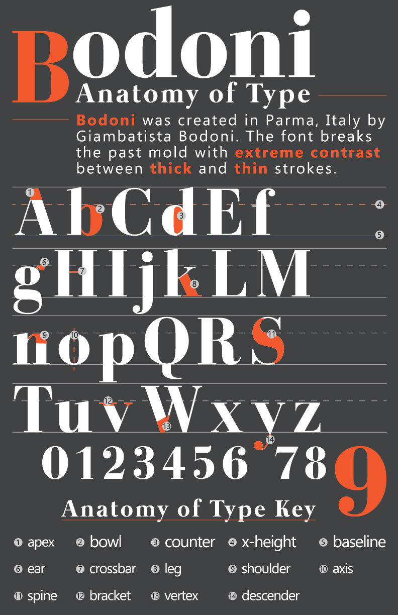 Then Create A Type Anatomy Poster The Font I Chose To Work With Was Bodoni Due How Innovative It At Time Introduced