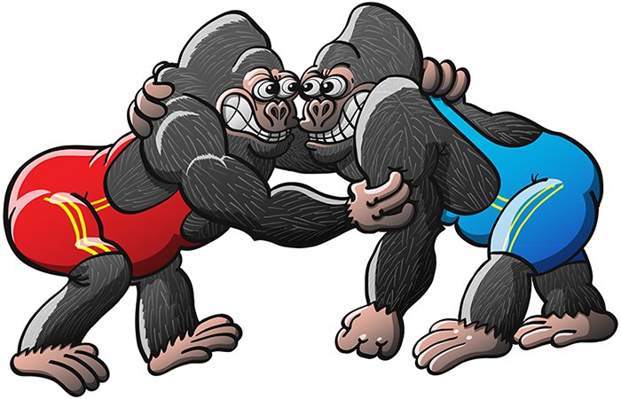Athletic gorillas fighting in a wrestling match