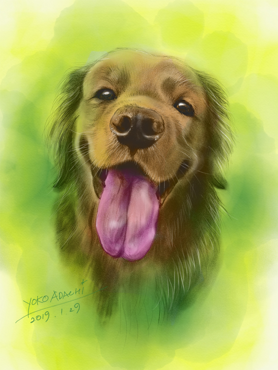 ILLUSTRATION  dogillustration GOLDENRETRIEVER Retriever dog doglover art Drawing  sketch painting