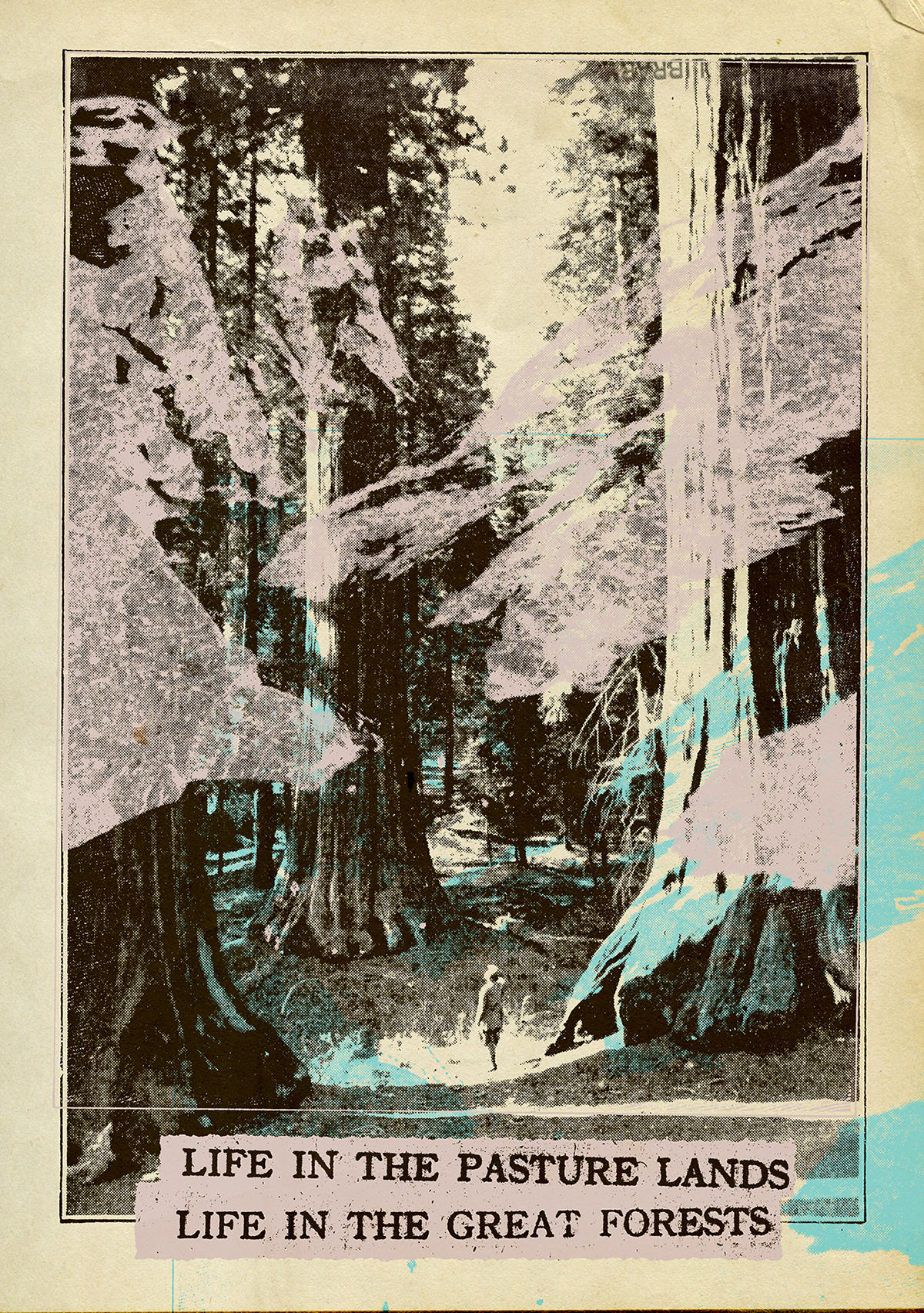 collage graphic design  photomontage Multimedia  decoupage mountains trees posters textbook vintage