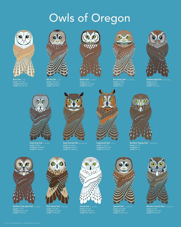 NorthwestBirding.com - Birds  Owls Portland Oregon