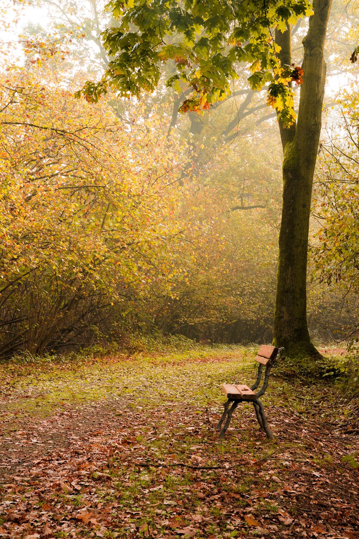 Landscape Park wild wood natura autumn leaf