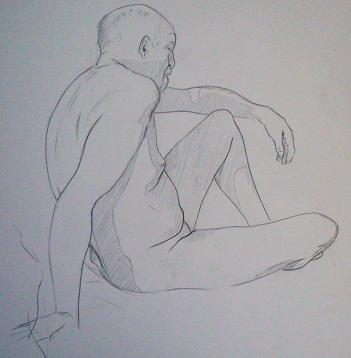 progression anatomy ILLUSTRATION  Drawing  life studies