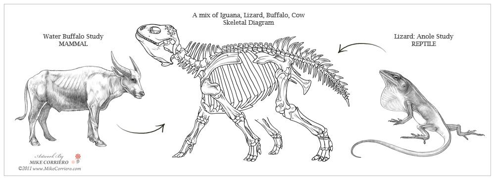 Buffalo Skeleton Diagram Wiring Diagrams