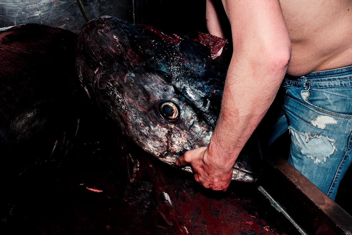 tuna fish process Photography  blood knife reportage document black sicily