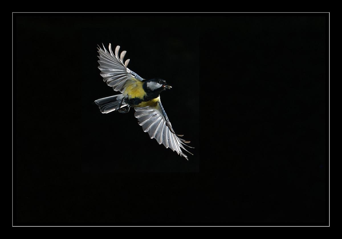 Image may contain: animal, bird and yellow