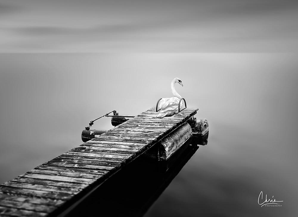 Image may contain: bird, ship and boat