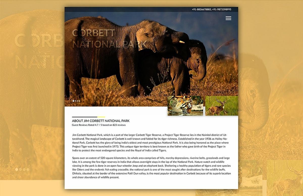 jimcorbett India Website Web Design  UI ux UI/UX UI/UXdesign Usability wireframe