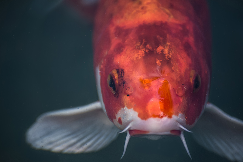 Adobe Portfolio animals fish bugs
