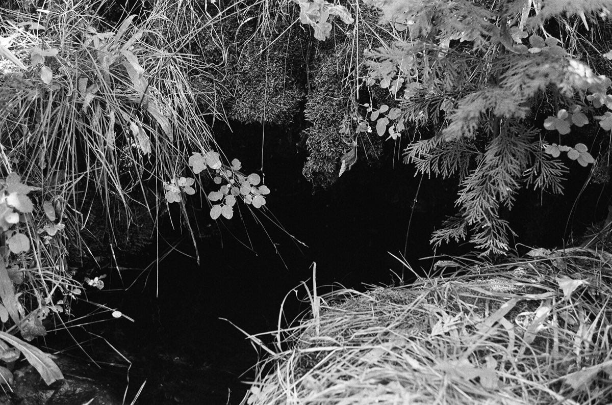 Nature 35mm black and white Film