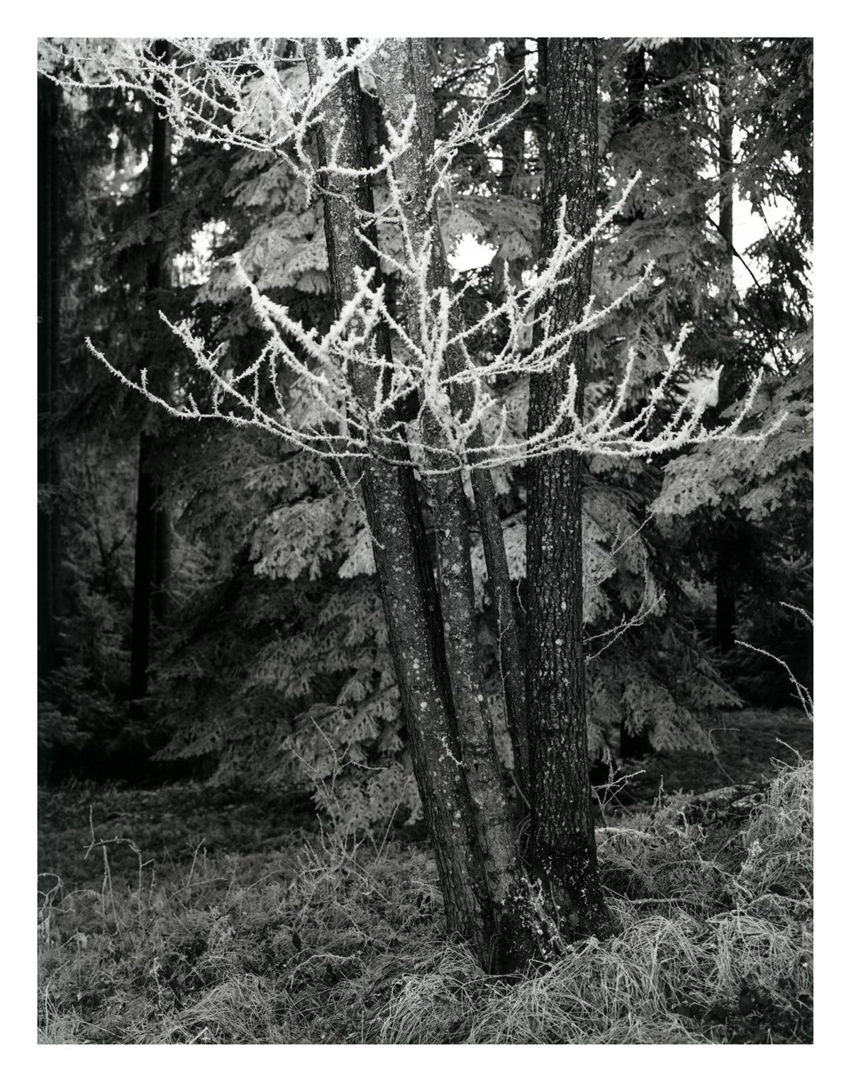 Adobe Portfolio forest film photography darkroom print dunkelkammer Analogfotografie