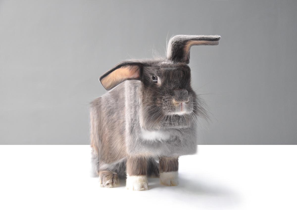 #Minecraft #manipulation #surrealism #conceptual #cube #animals #anicube #illustration photomanipulation