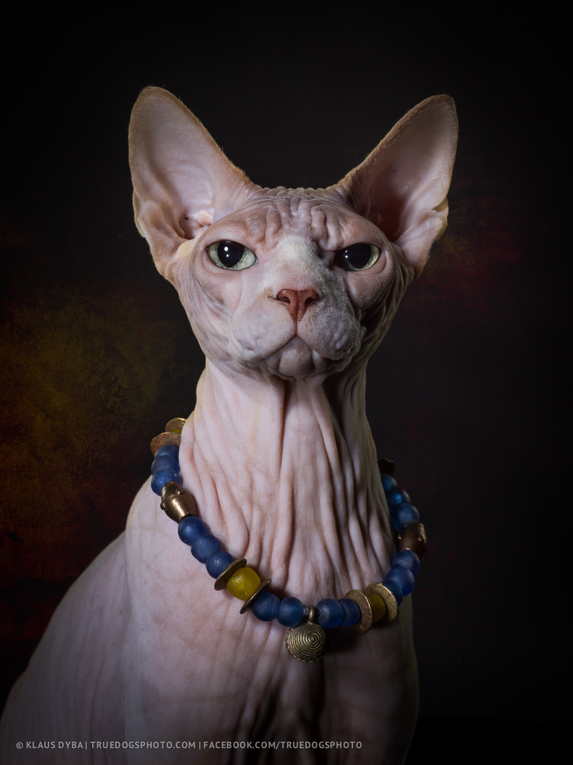 Bald cats: what are these wonderful creatures 21