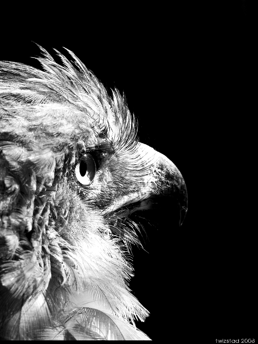 Save to collection follow following unfollow black and white eagle photography