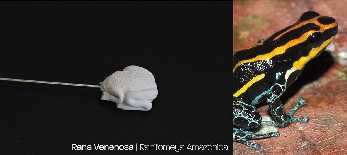 Amazon animal ArqDisUniandes critical industrial design  Nature Packaging product producto SOMOSARQDIS