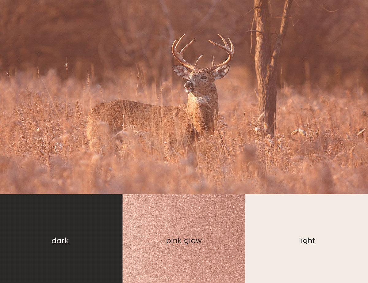 Image may contain: animal, mammal and antelope
