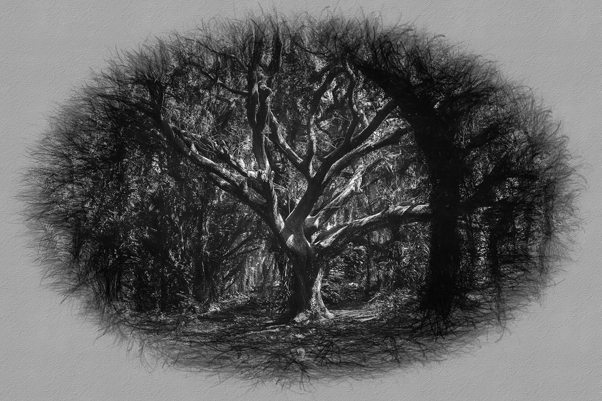behind the gardens trees woods arbres forêt forest monochrome bnw Pencil drawing NVENTFISCHER