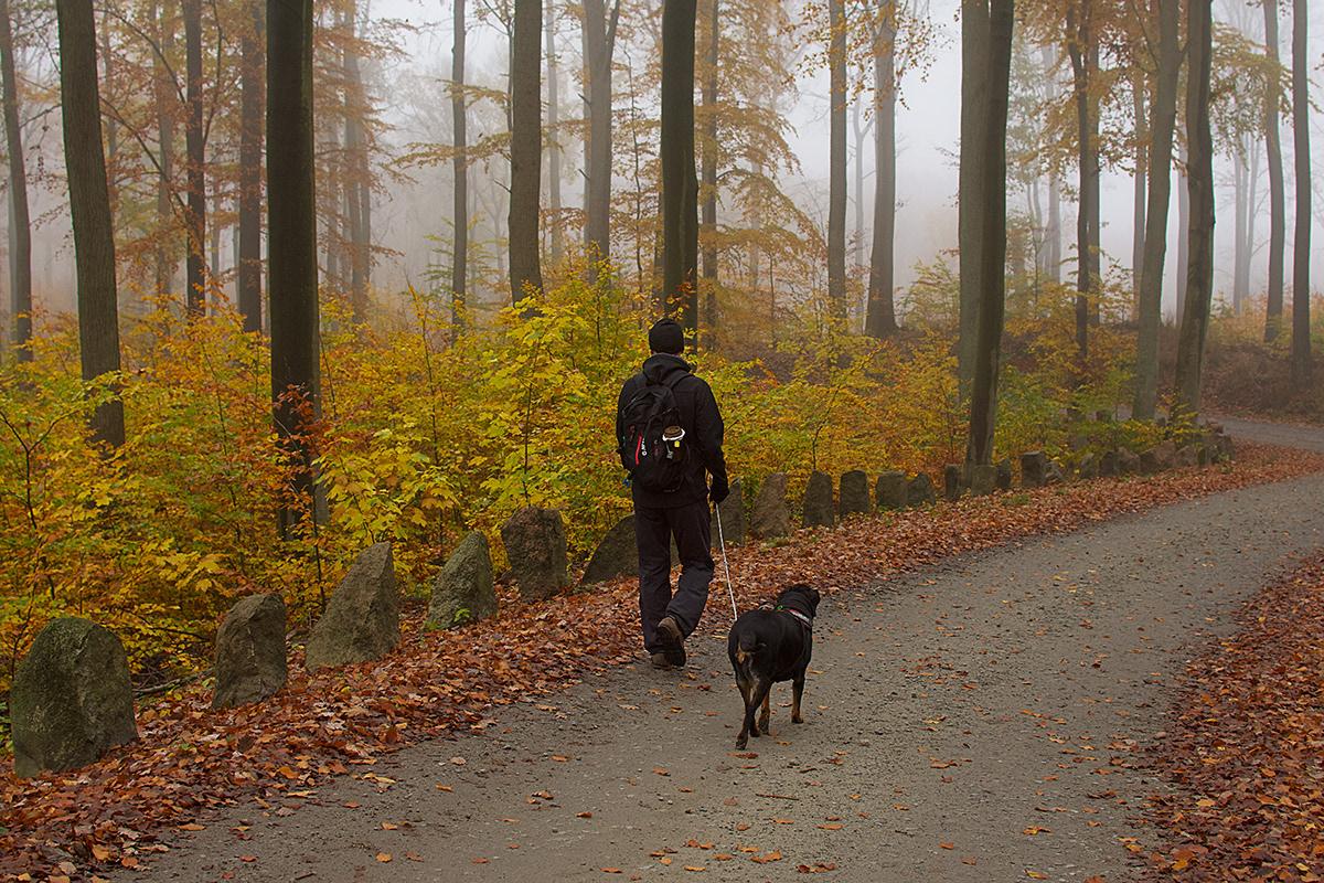 Mężczyzna z psem na spacerze w jesiennym lesie.