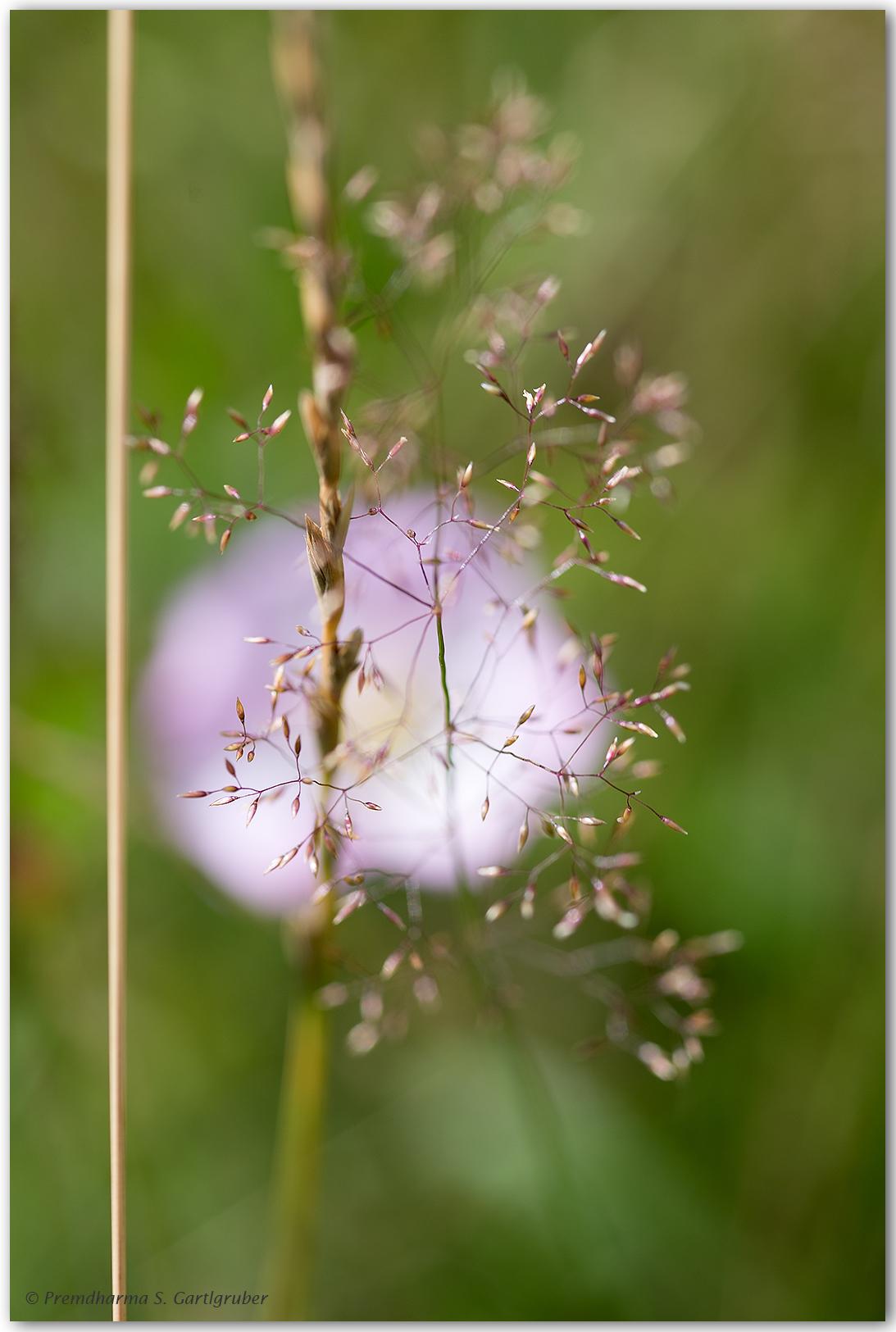 Adobe Portfolio flower macro makro Plant