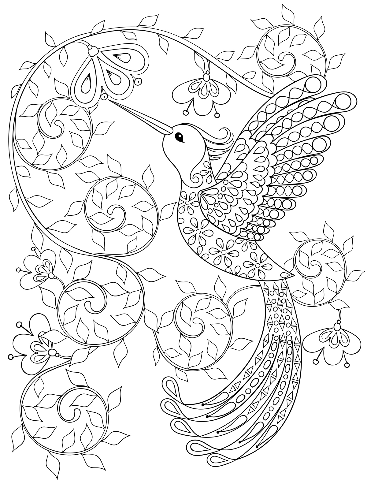 Hummingbird. Adult coloring page. on Behance