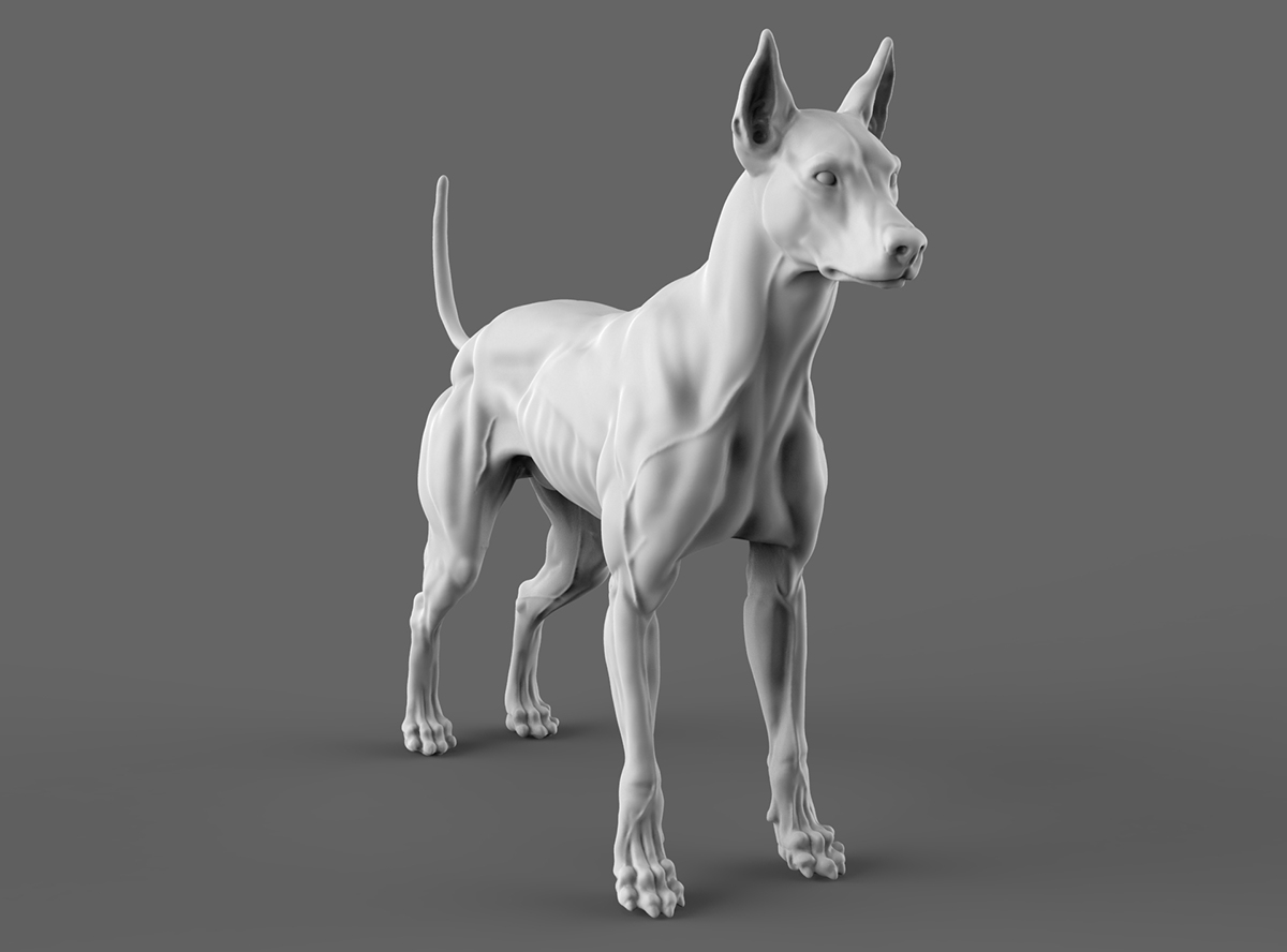 Dog anatomy study on Behance