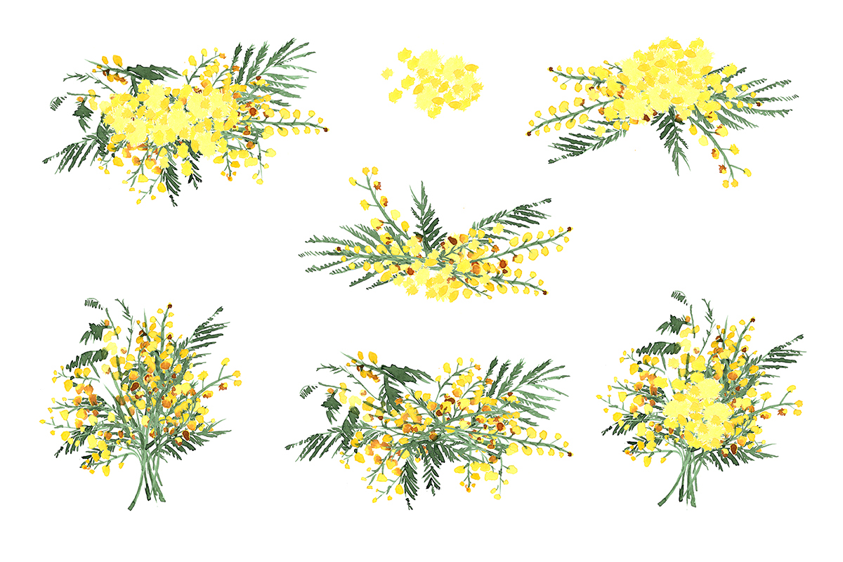 Mimosa Flowers Watercolor Clipart On Behance