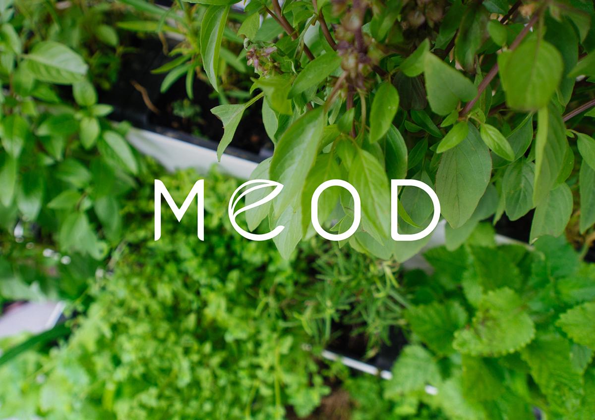 logo singapore MEOD Plant pot visual identity minimalist simple japanese Nature garden