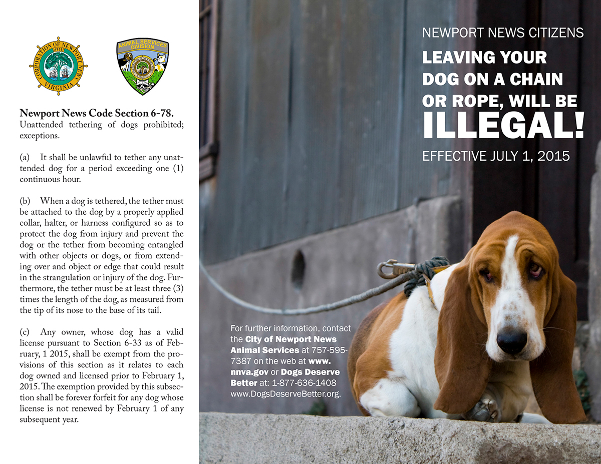 Layout animal brochure