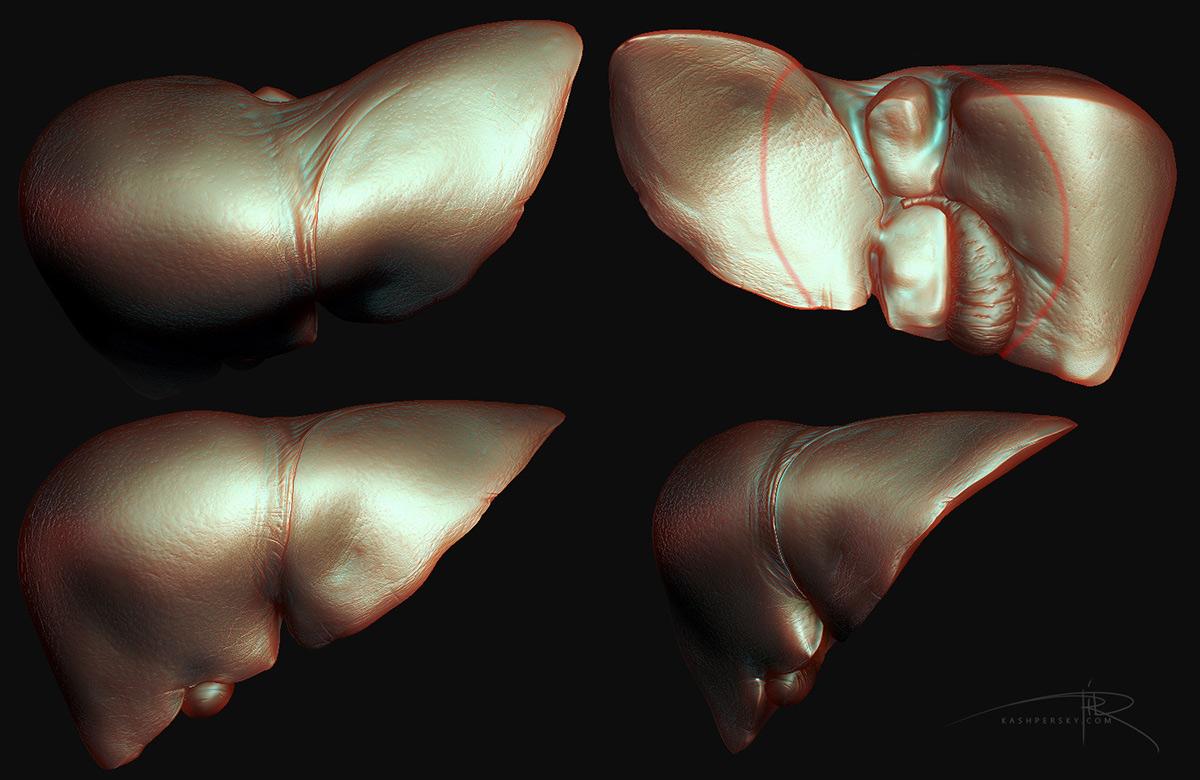 liver печень Medecine science